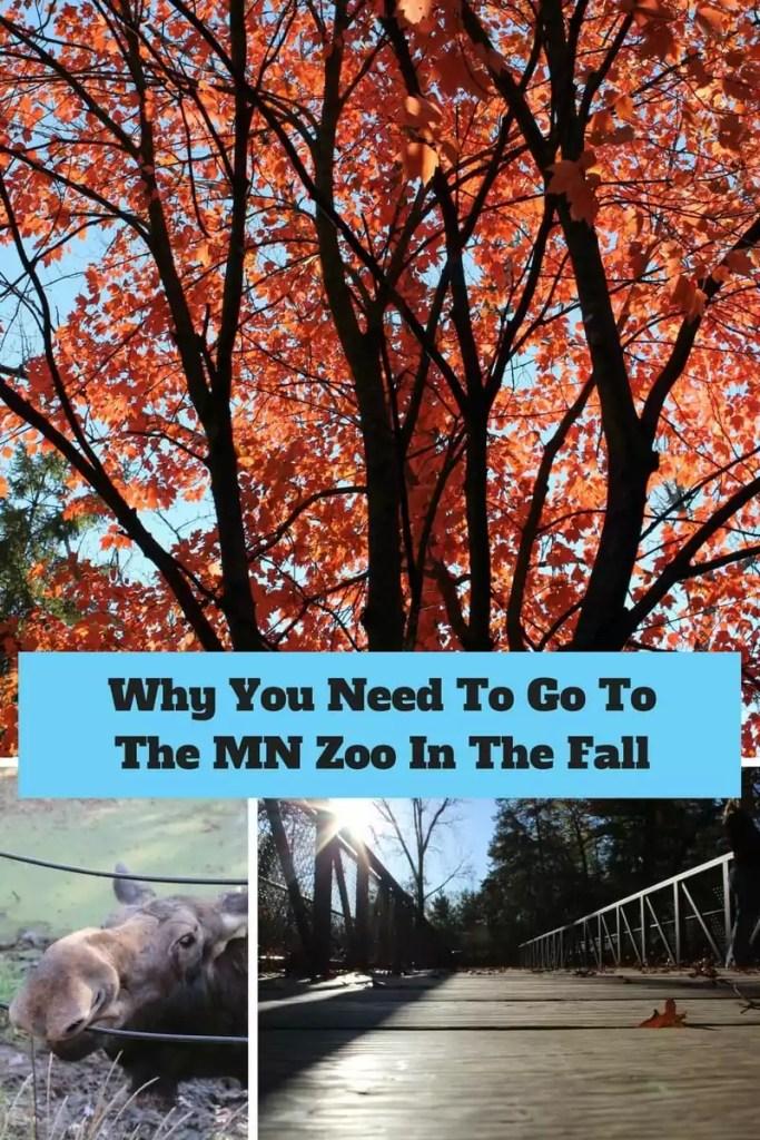 Fall At the MN Zoo