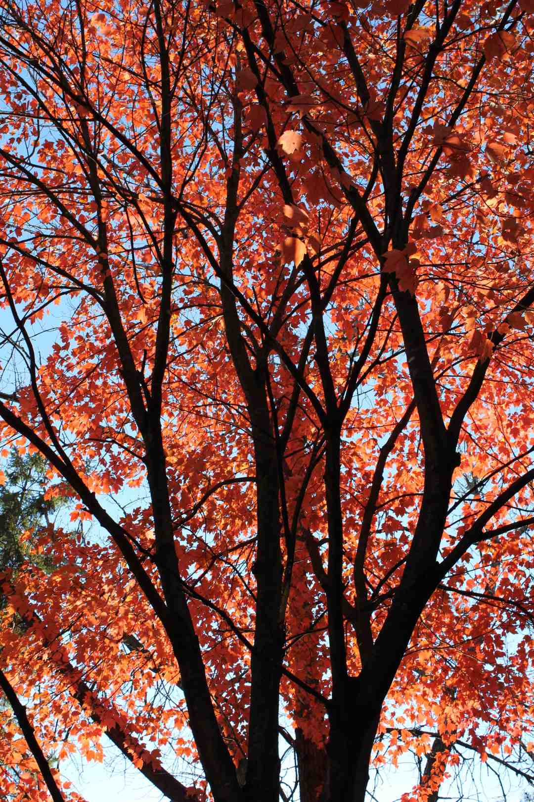 Autumn Trees at the MN Zoo
