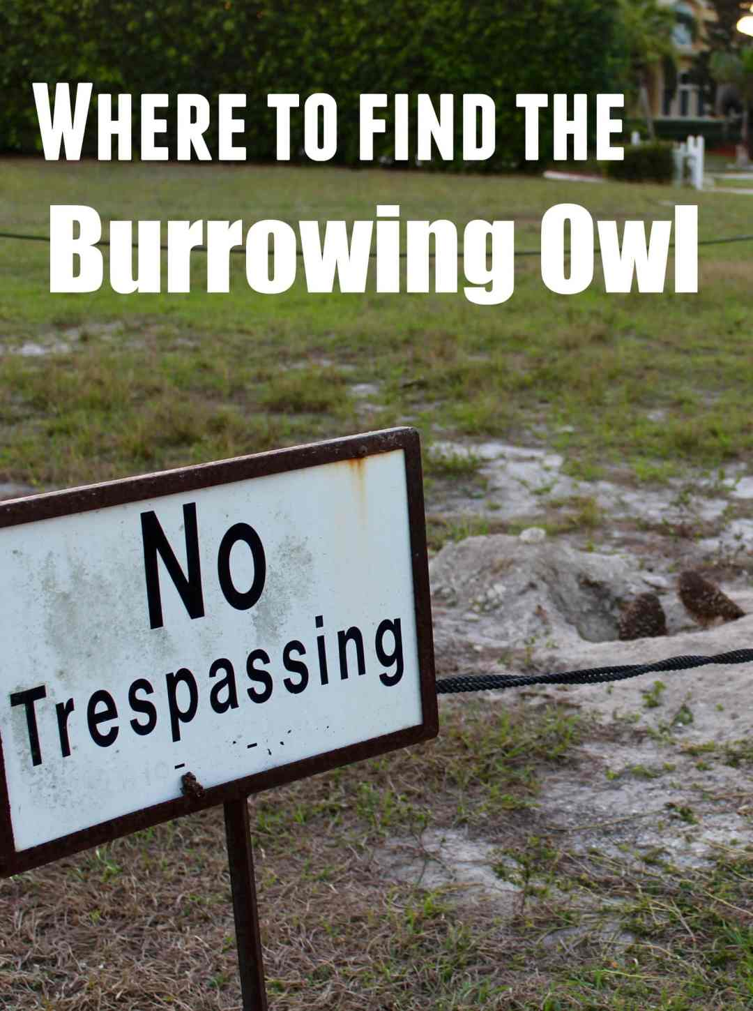 Marco Island is filled with Burrowing Owls. They are a must see for any visitor to the Island.