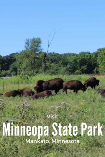 Between the camping, hiking, waterfalls and bison drive, find out how to see it all. Minnesota State Parks | Buffalo | Minnesota | Outdoors | Adventure | Bison | USA