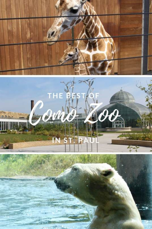 The Best of Como Zoo. What to see and how you can feed the Giraffes!