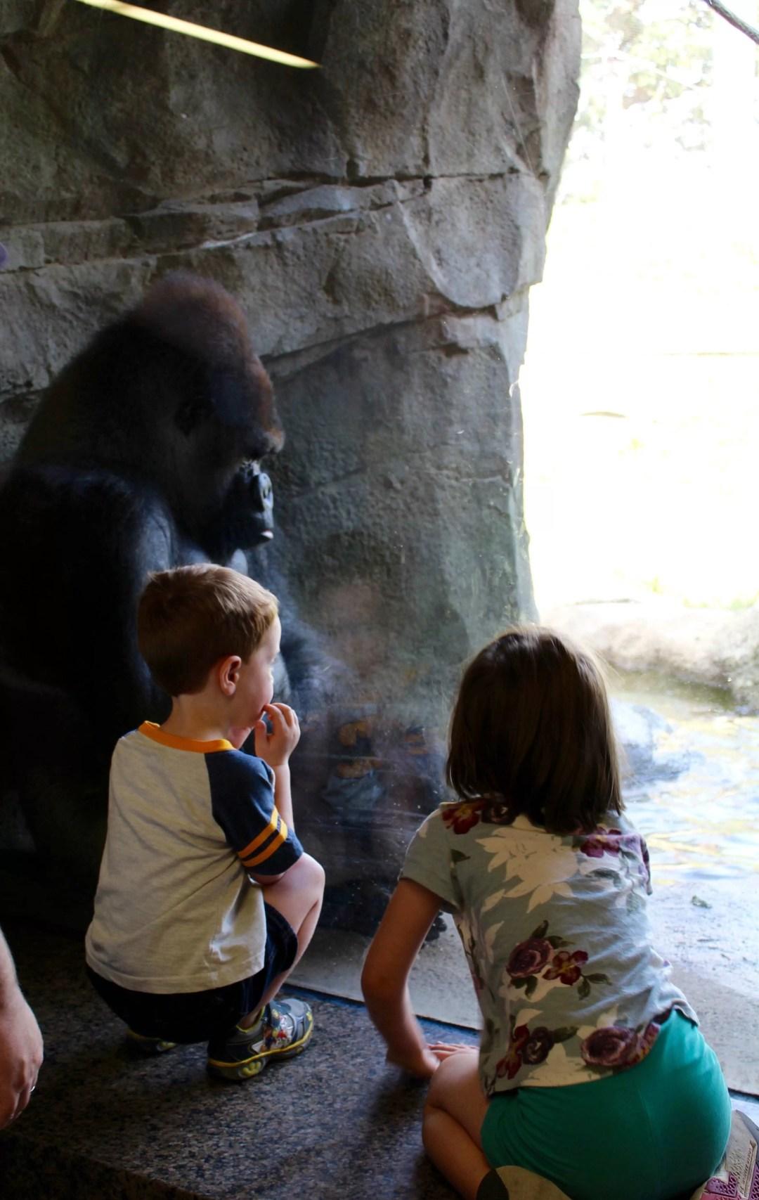 Gorilla's at the Como Zoo