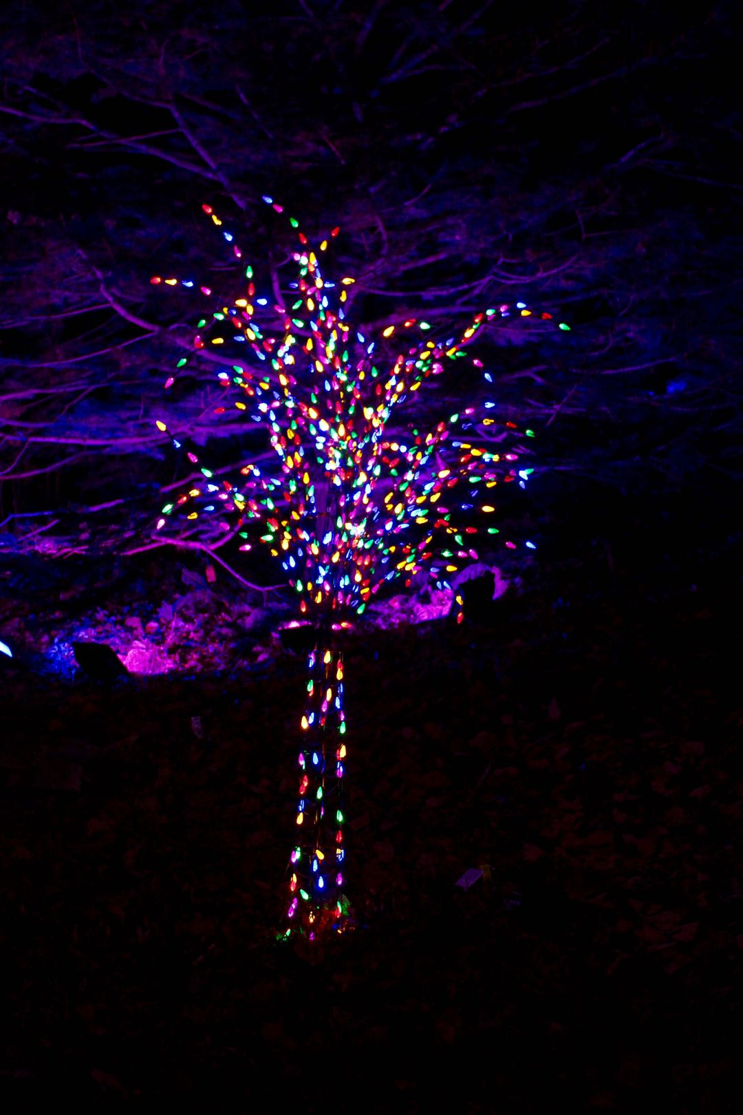 Lighted Trees at the MN Landscape Arboretum