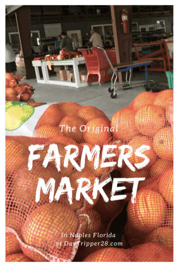 Find out where to get all the orange and citirus at a Farmers Market in Florida, the South Naples Citrus Grove. #FloridaOrange #NaplesFlorida