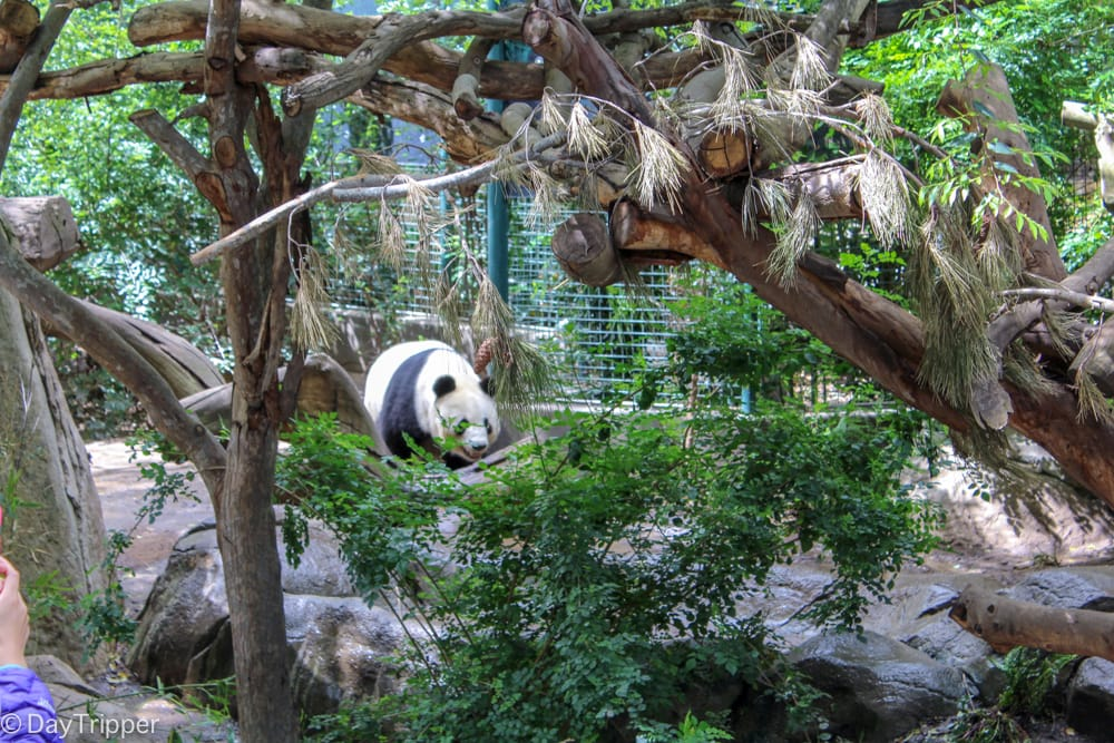 Panda Time and other Tips for the San Diego Zoo