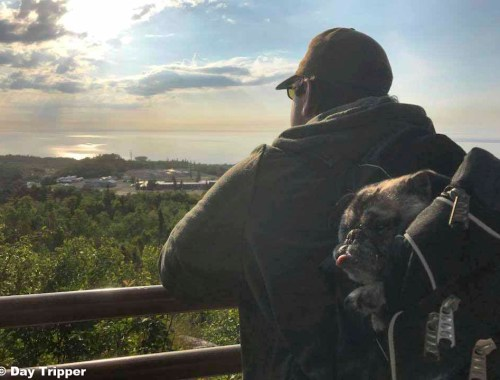 Hiking with a Blind Dog