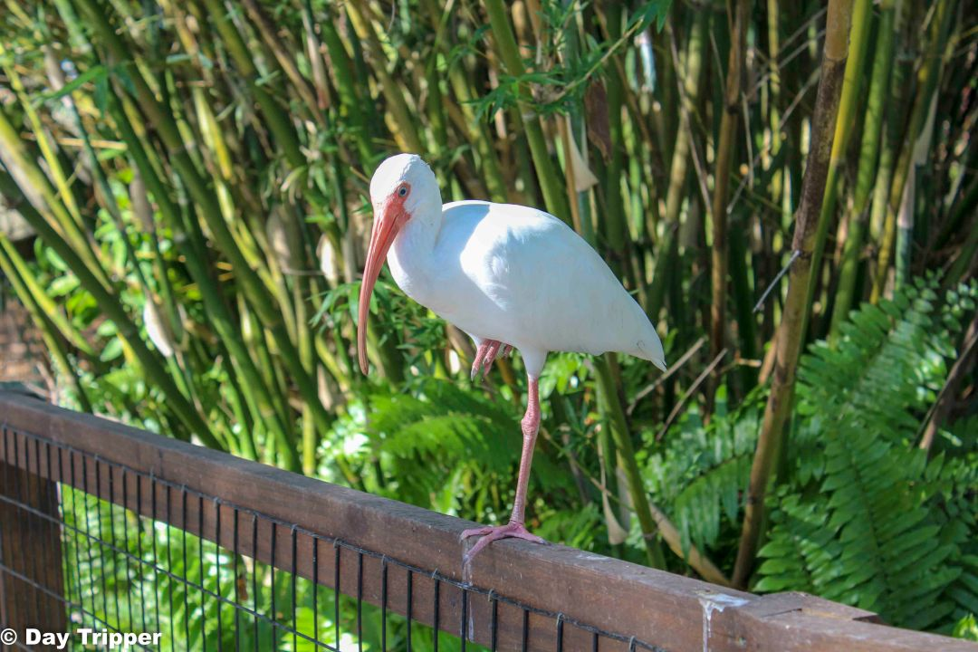 Bird Resting on a fence at the Naples Zoo