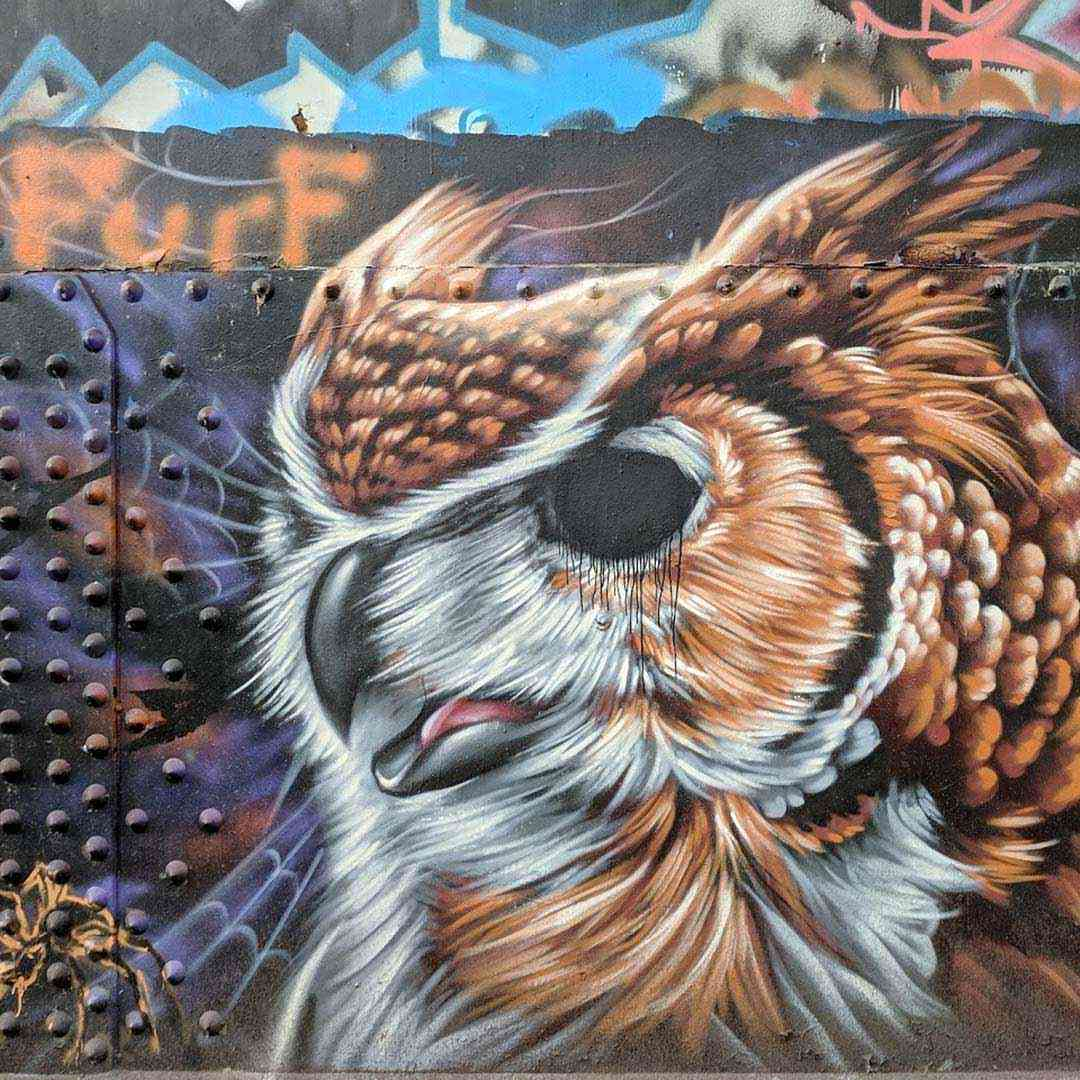 Cobbs Hill Washington Grove graffiti owl