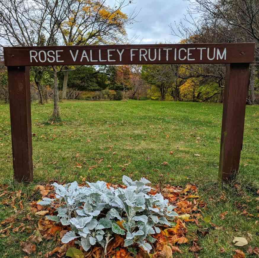 Durand Eastman Park Rose Valley Fruiticetum