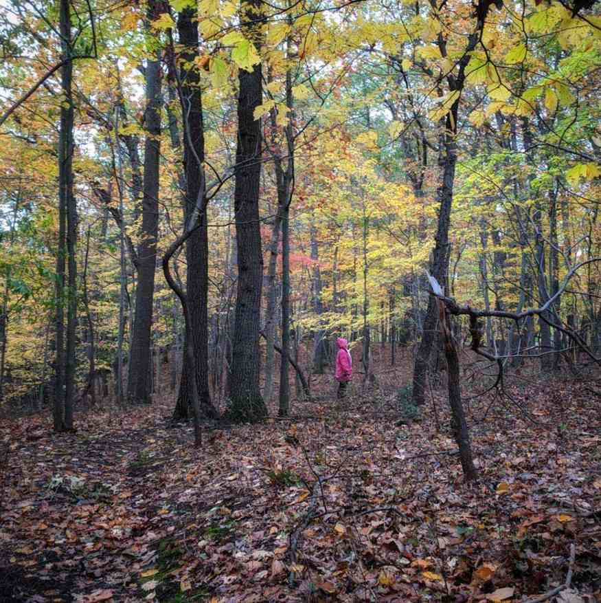Durand Eastman Park into the woods
