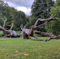 Genesee Valley Park broken tree