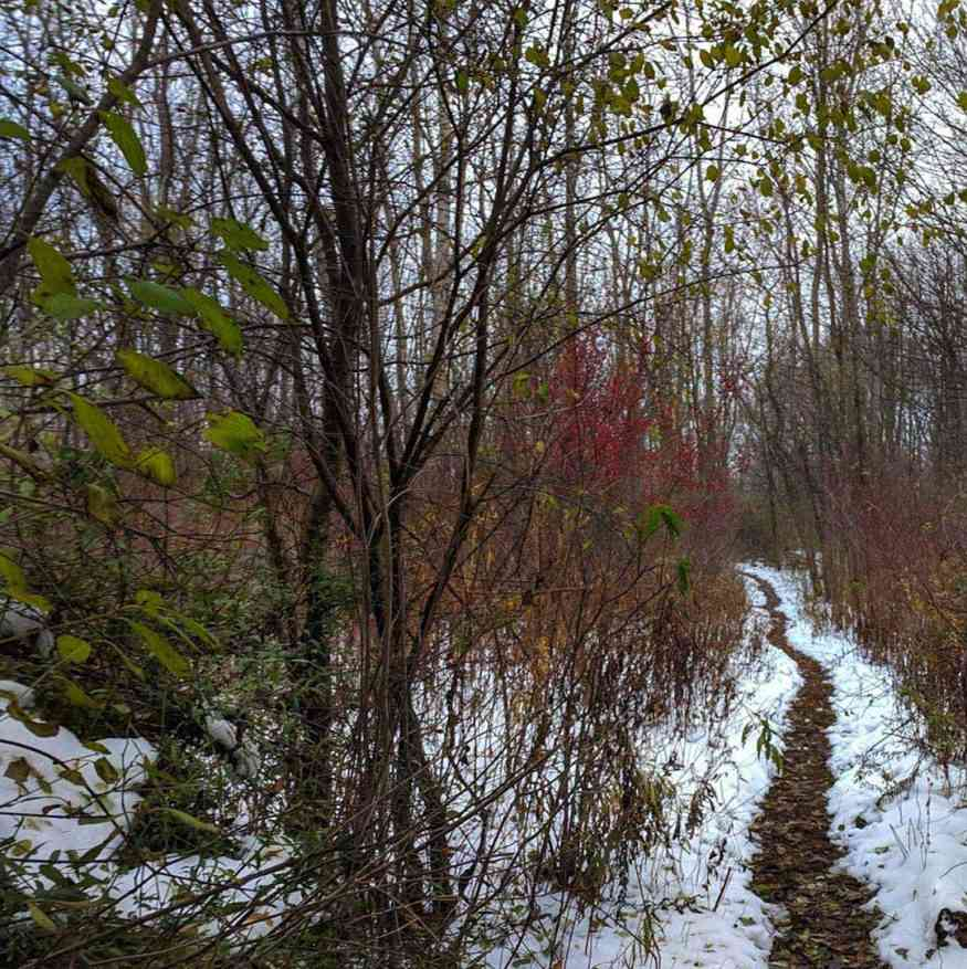 Greece Canal Park winter trail