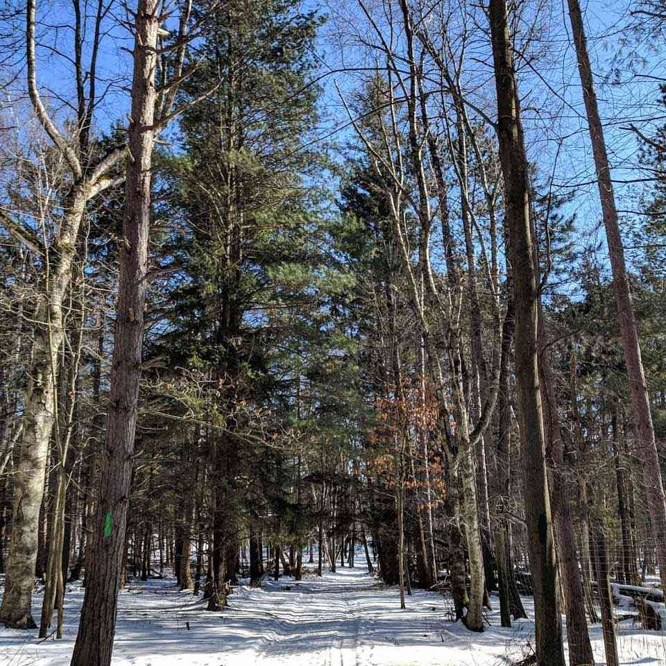 Letchworth Humphrey Nature Center winter trail