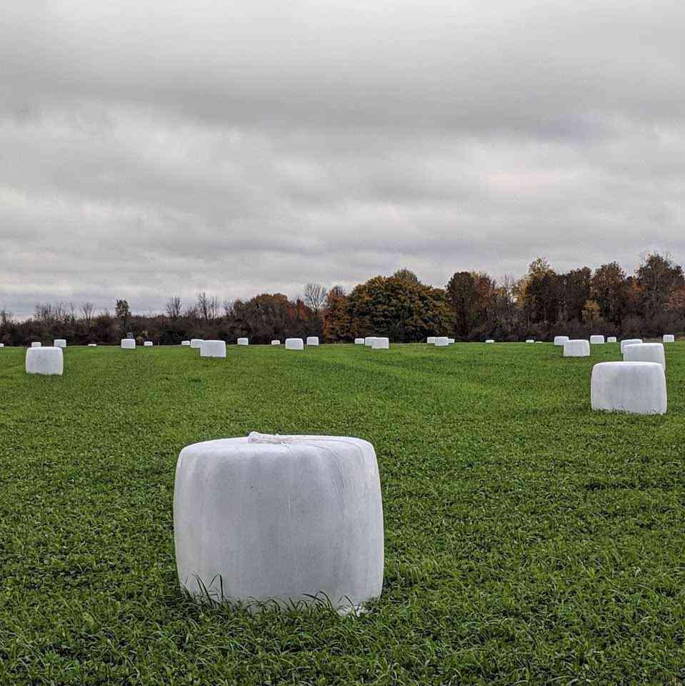 Organic Marshmallow Farm field