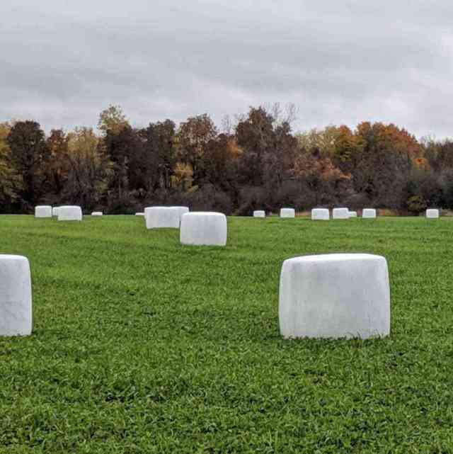 Organic Locally-grown marshmallows