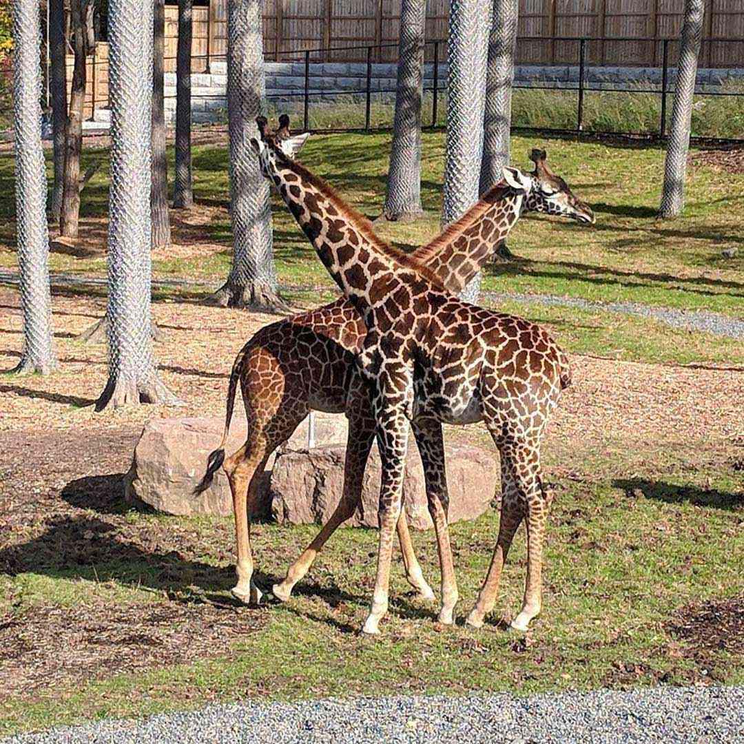 Winter break: Seneca Park Zoo