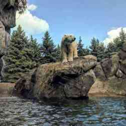 Seneca Park Zoo polar bear