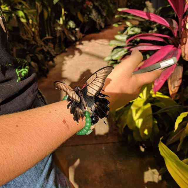 Strong Museum of Play Dancing Wings Butterfly Garden landed on wrist