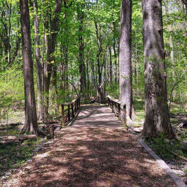 Tinker Park summer trail