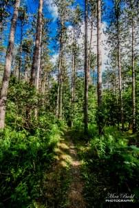 Best hiking Trails in Ontario, Hiking Caledon,