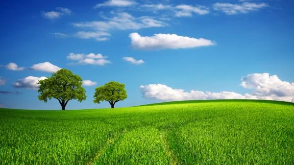 green field in spring daywallpaper