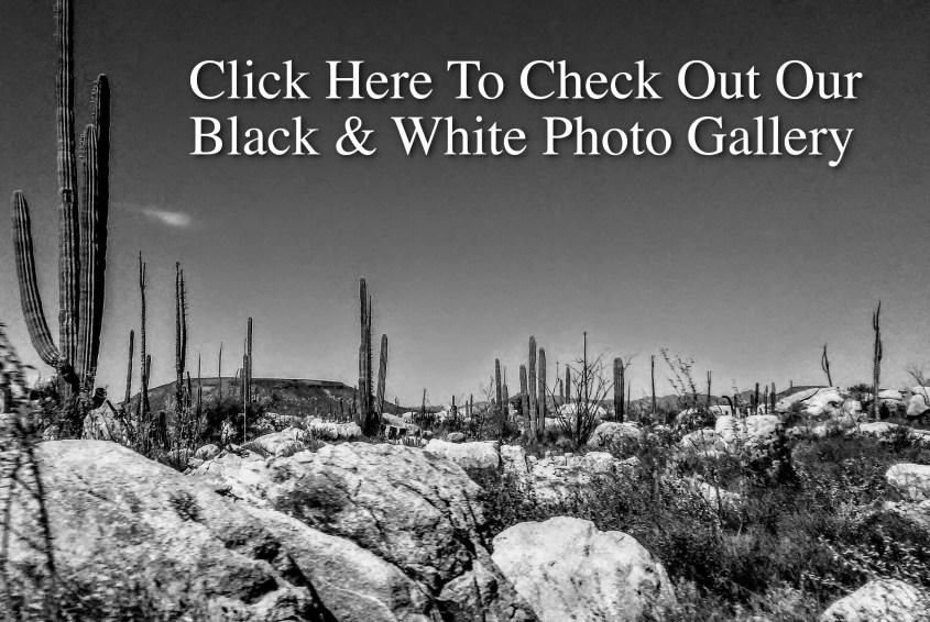 B & W Photo Gallery Link