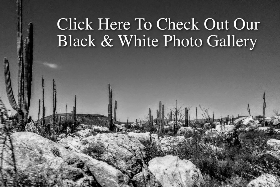 B & W Photo Gallery Link