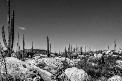Along Highway 1 between the border and La Paz, Baja California Sur