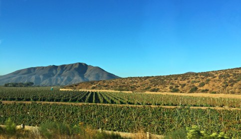 The wine district between Ensenada and Santo Tomas
