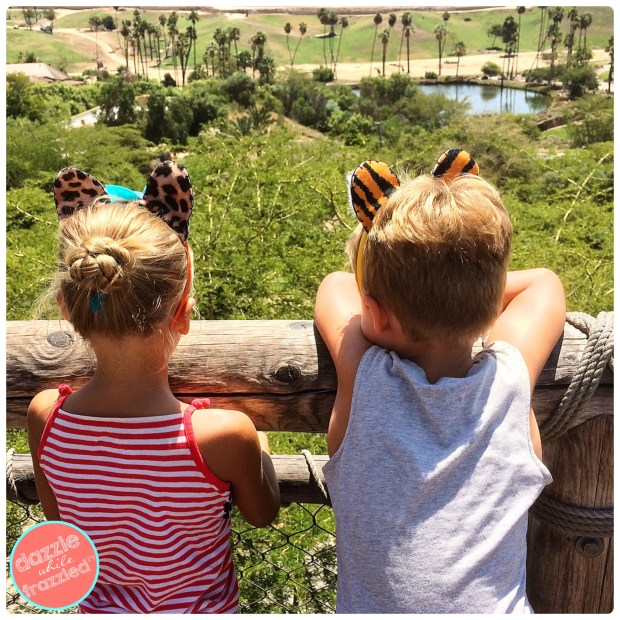 Tips for visiting the San Diego Safari Park | DazzleWhileFrazzled.com