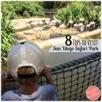 8 San Diego Safari Park Tips for Kids and Family