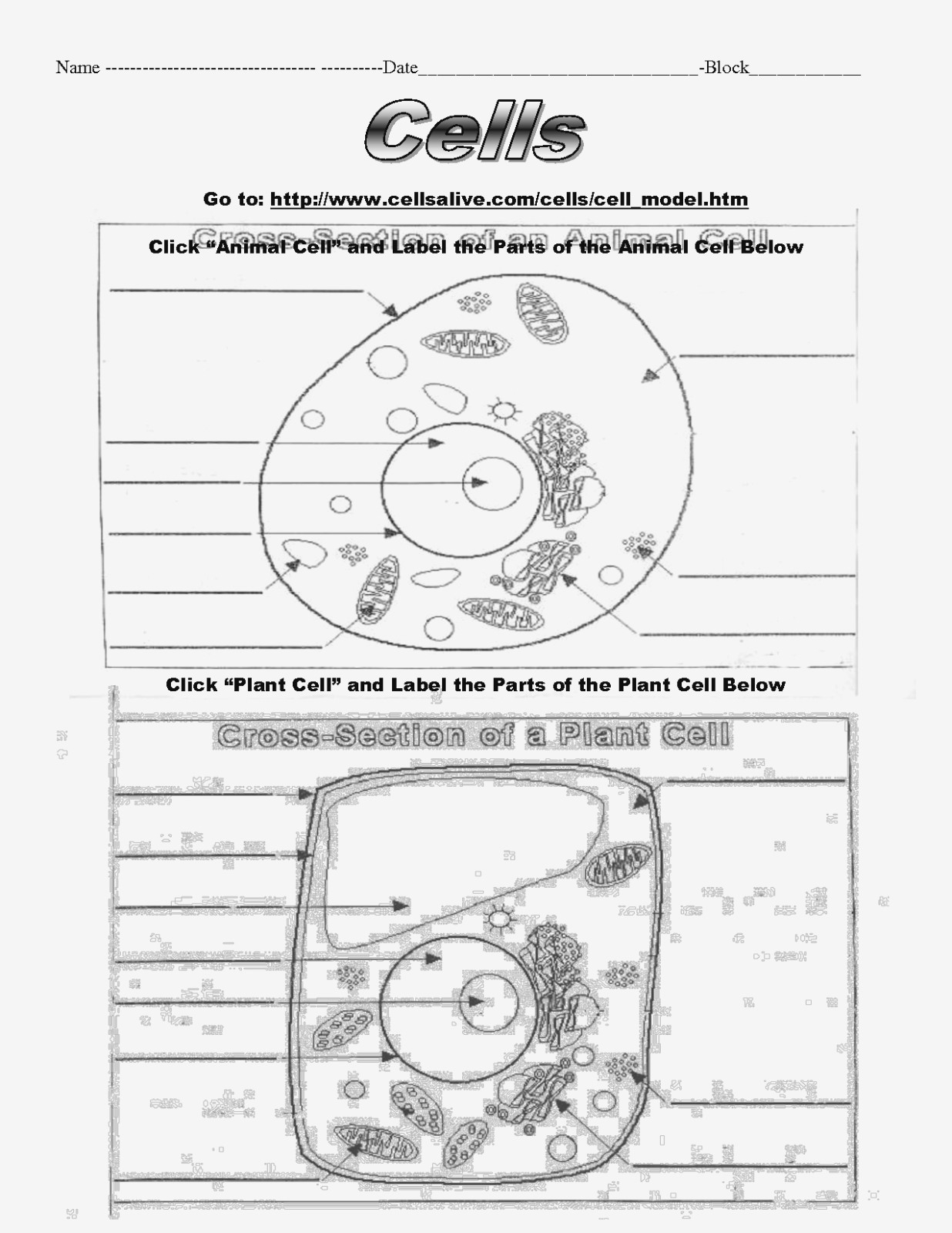 Animal And Plant Cell Labeling Worksheet Yooob