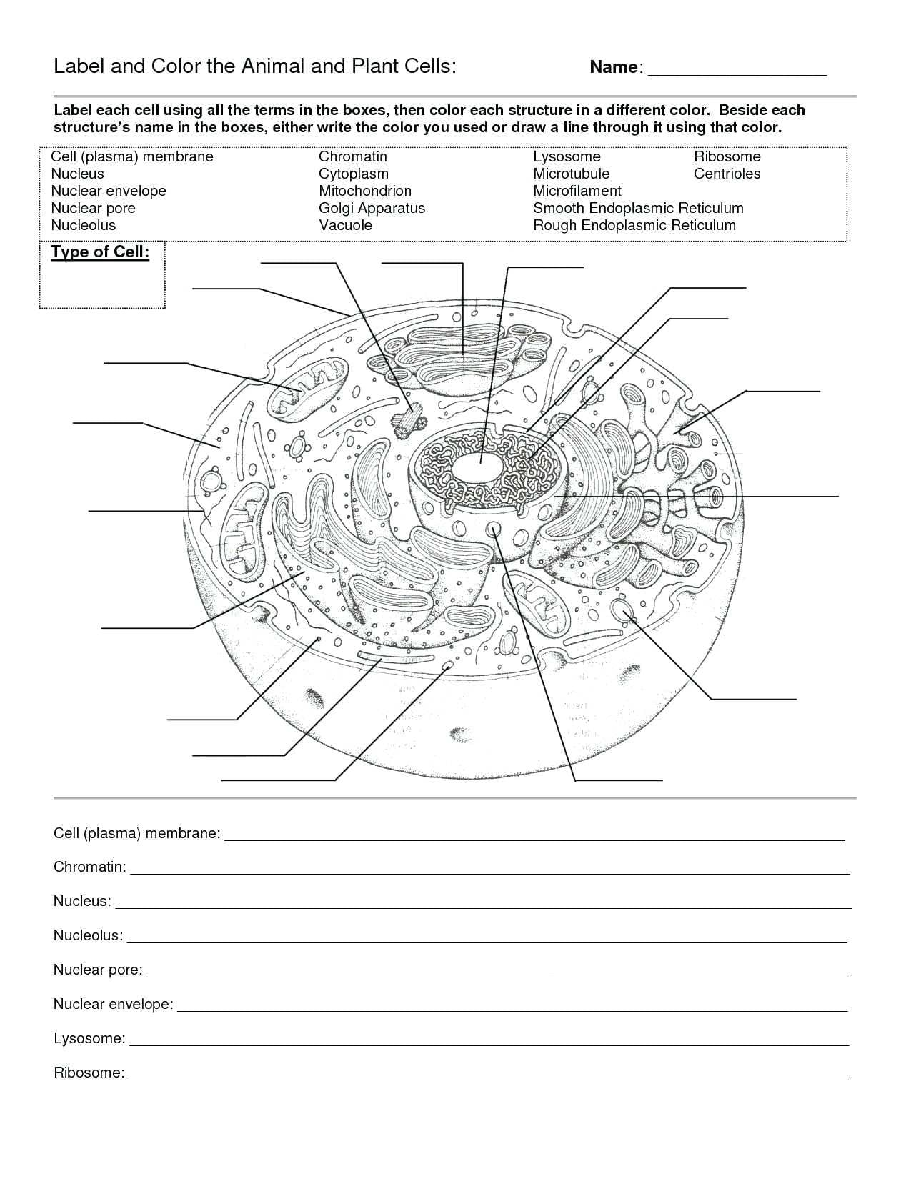 Animal Cell Diagram Coloring Worksheet Templarcolorco