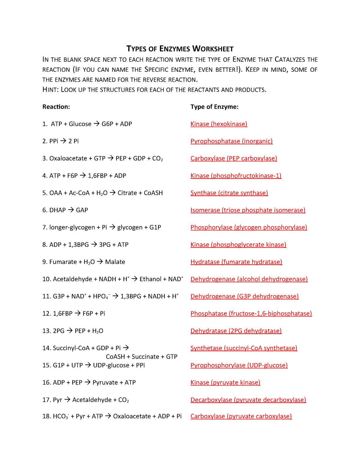 Bio205 Type Of Enzyme Worksheet Answers Bio 305lec Ub