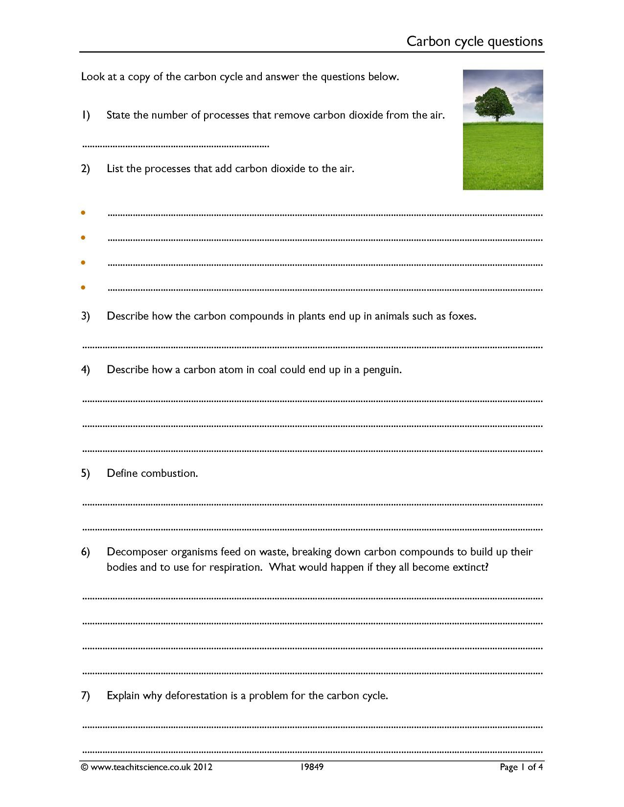 Effects Of Co2 On Plants Worksheet Answers