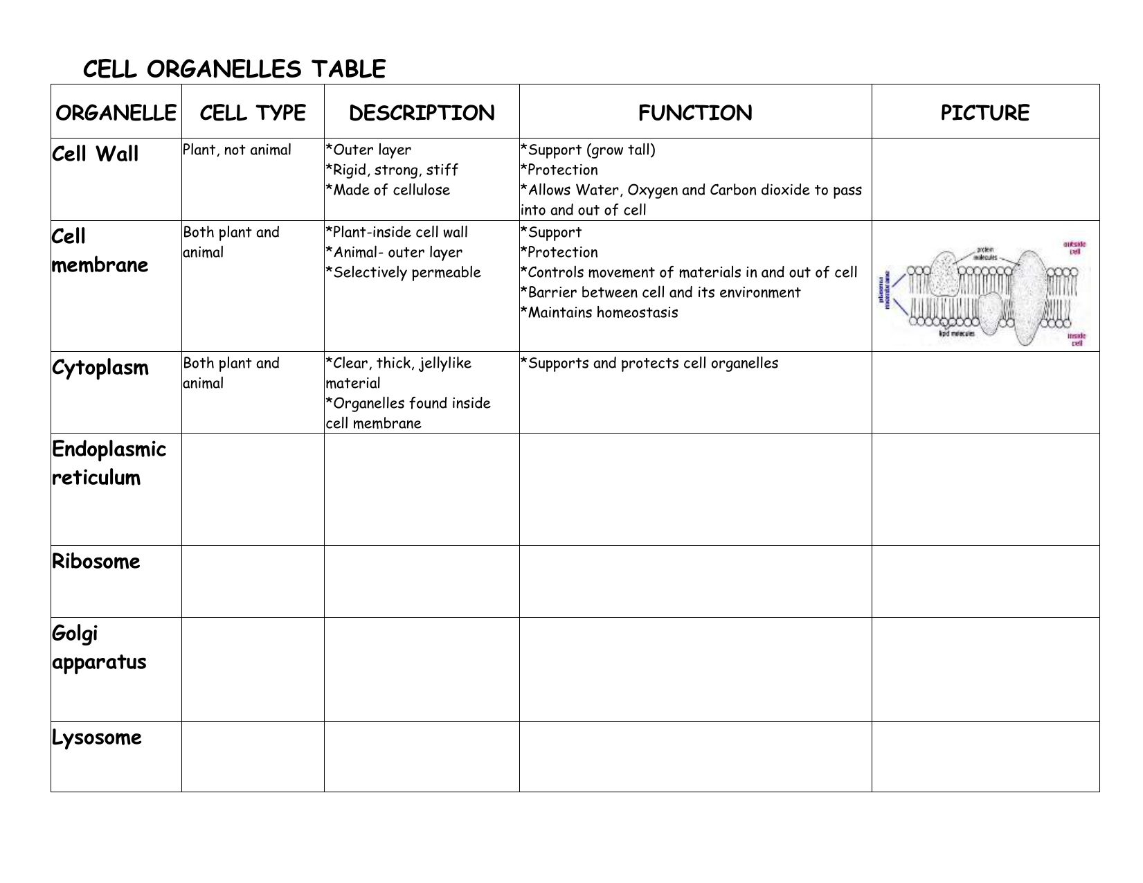 Cells And Organelles Worksheet