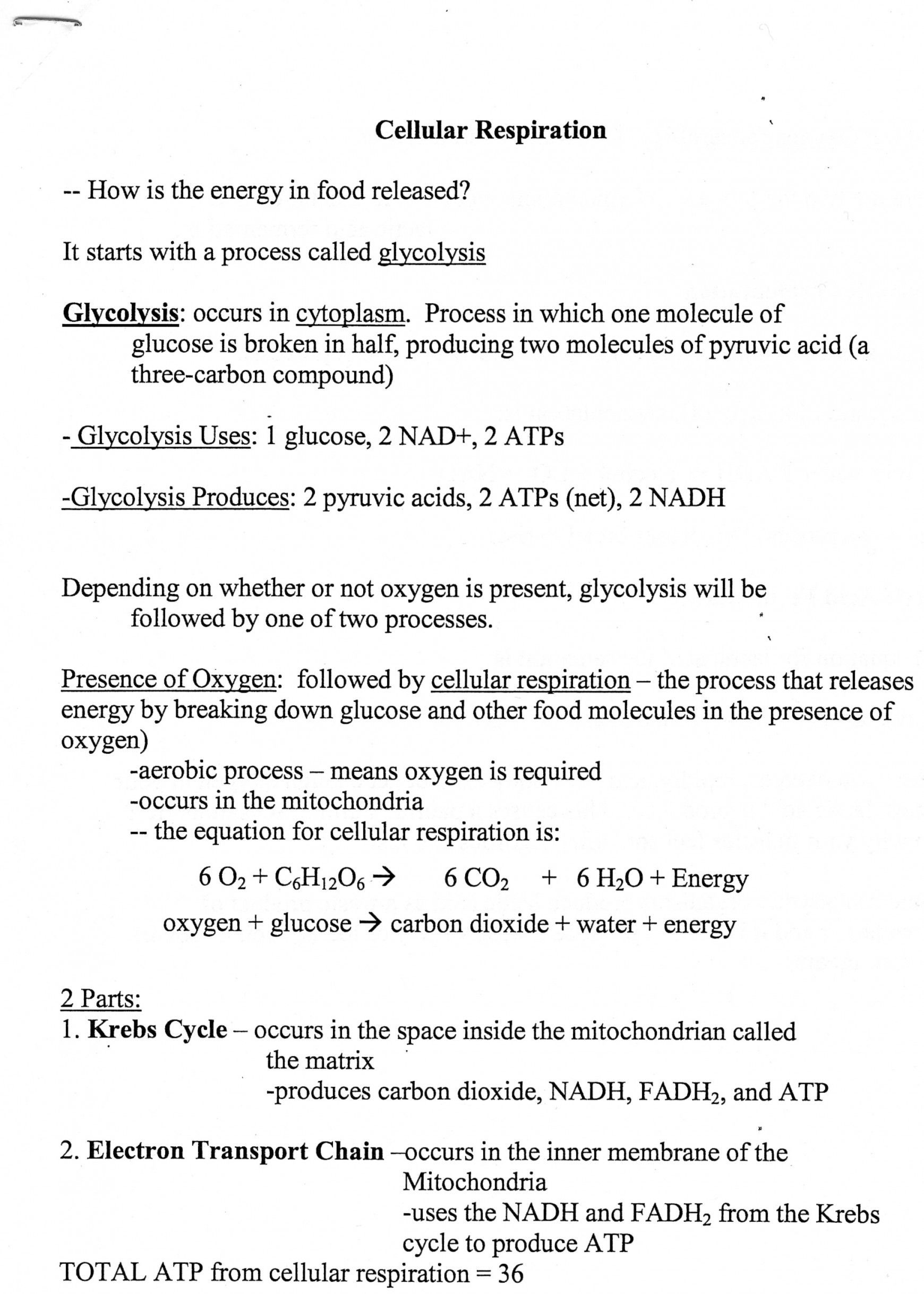 Cellular Respiration Breaking Down Energy Worksheet