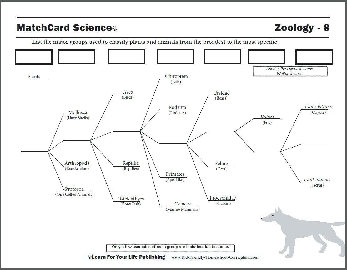 Classifying Animals Worksheet 3rd Grade Grade Worksheet On