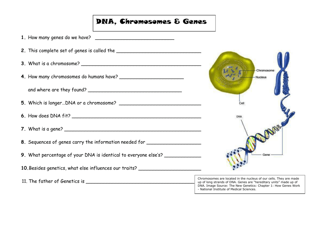 Dna Chromosomes And Genes Notes For Powerpoint Visual