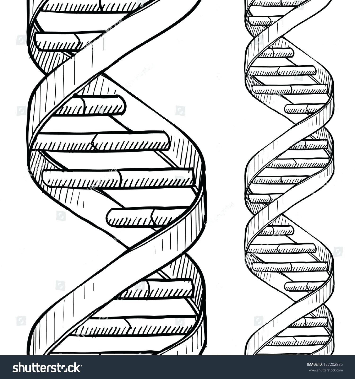 Double Helix Coloring Worksheet Answers Lagunapaperco