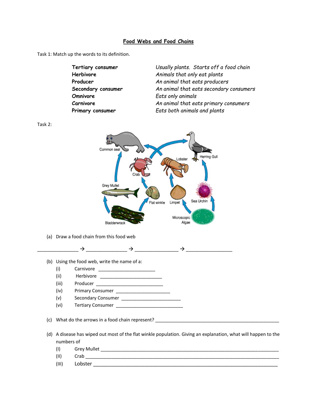 Producer Consumer Decomposer Worksheet