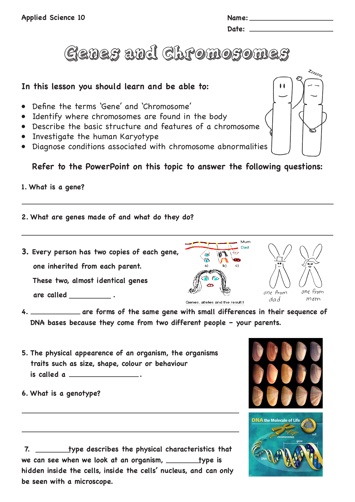Genes And Chromosomes Worksheet