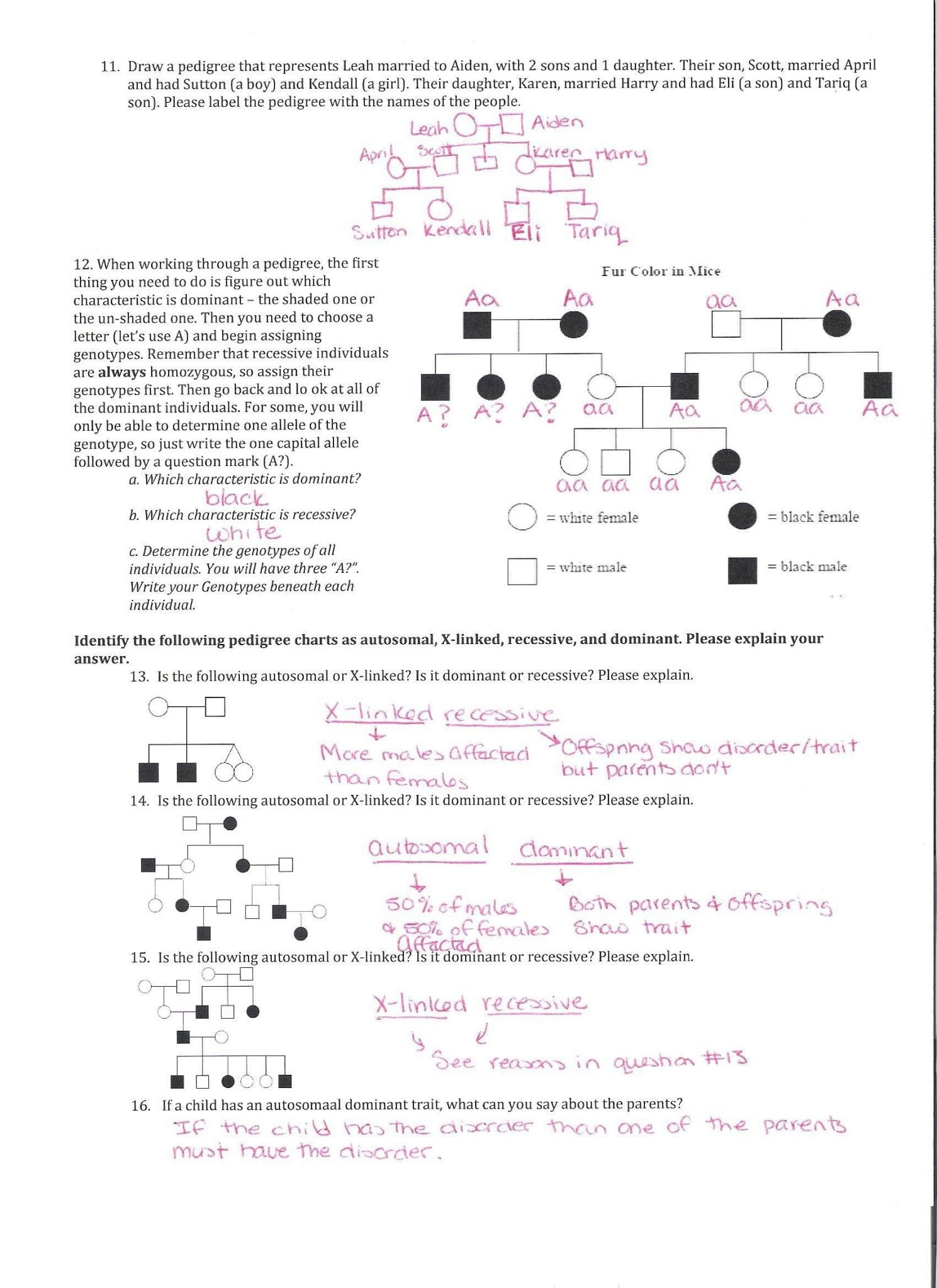 Genetics Worksheet Middle School