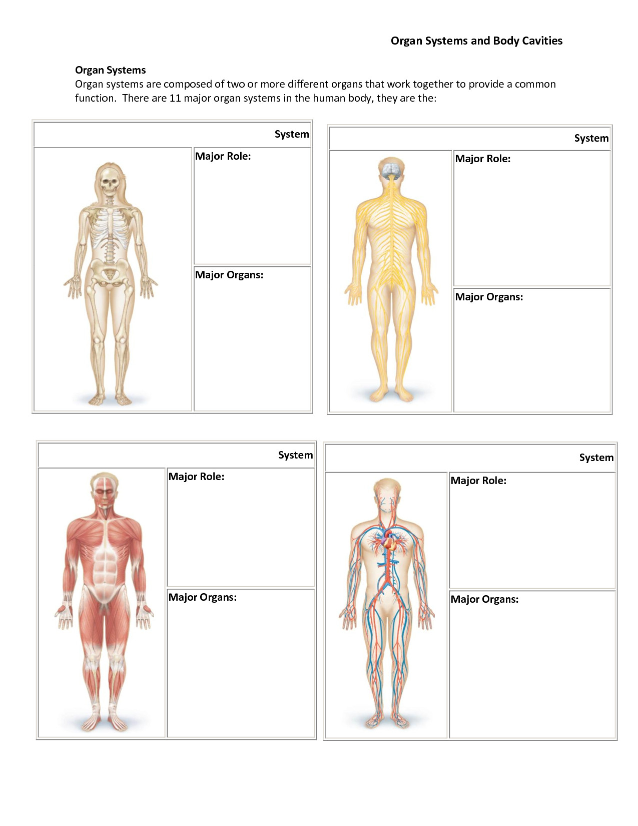 Human Body Systems Worksheets Probability Worksheets Bill