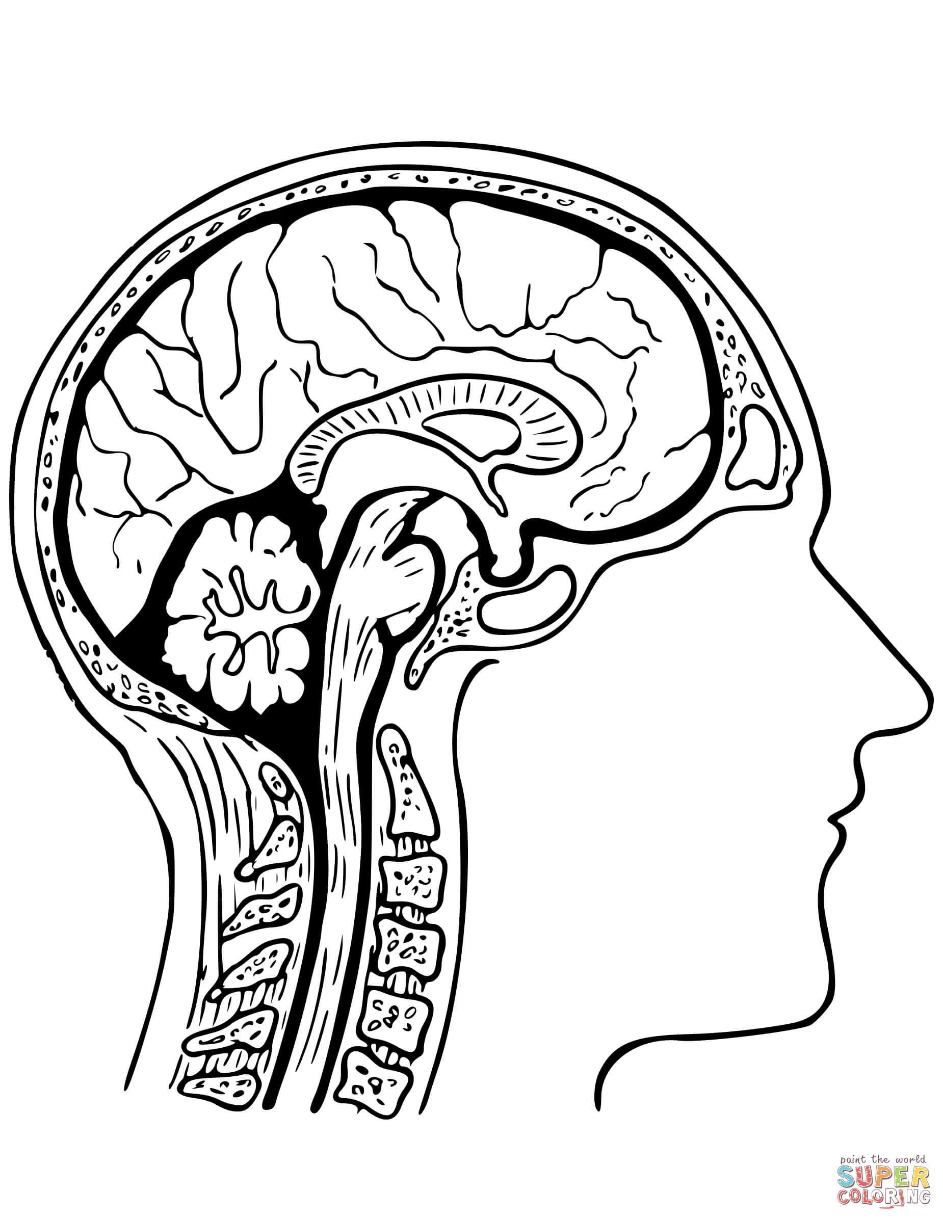 Brain Coloring Worksheet