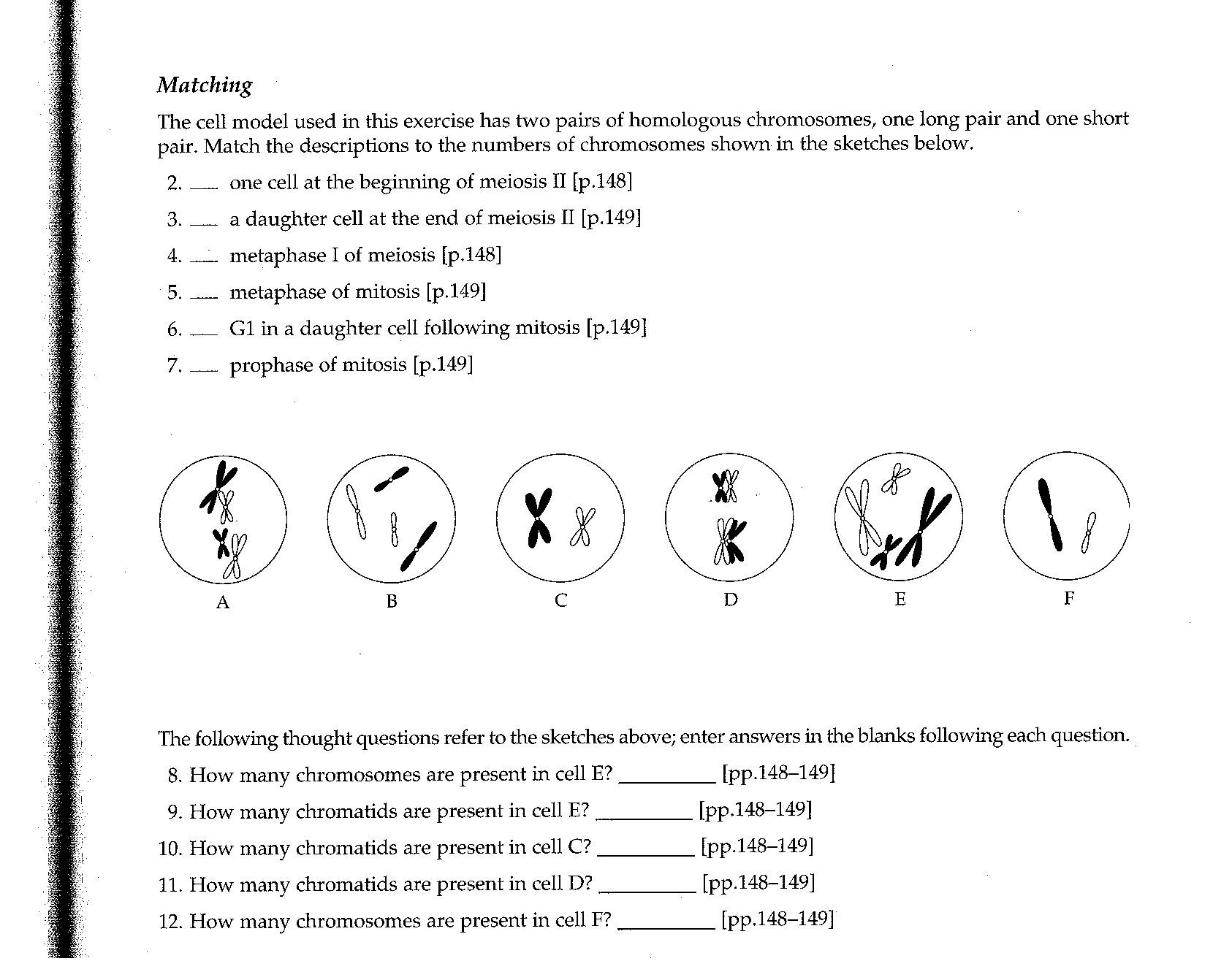 Meiosis Matching Worksheet 16 Best Of Meiosis Practice