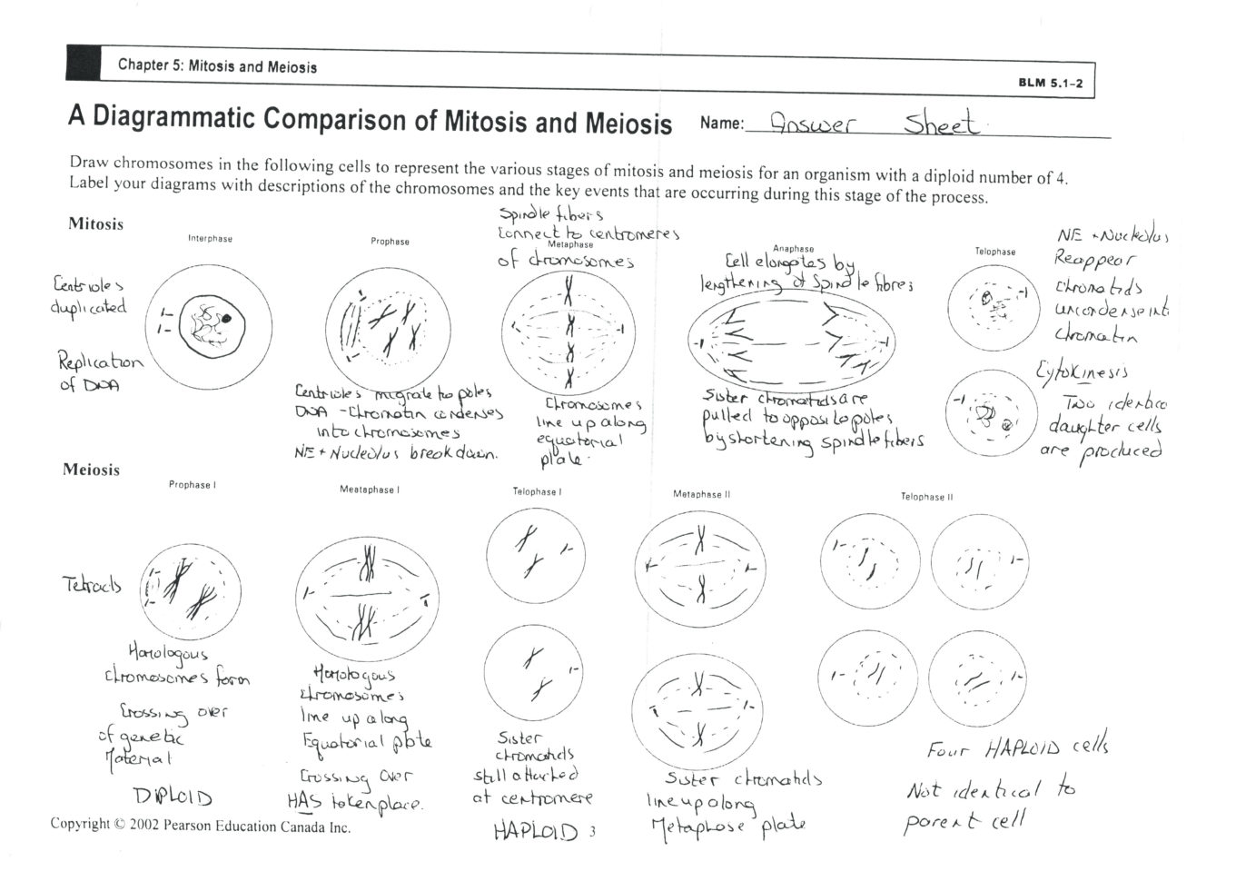 Mitosis Coloring Homework Spartanprintco