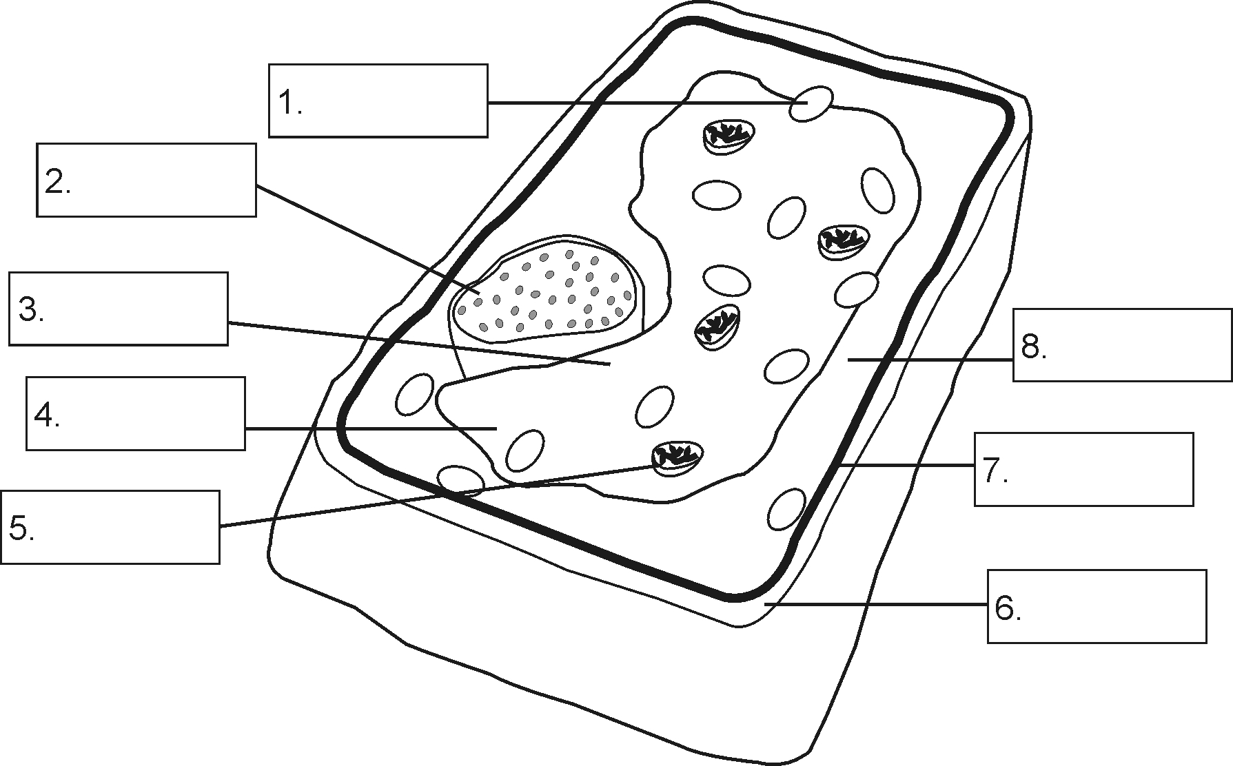 Plant Cell Drawing With Labels At Getdrawings Free For