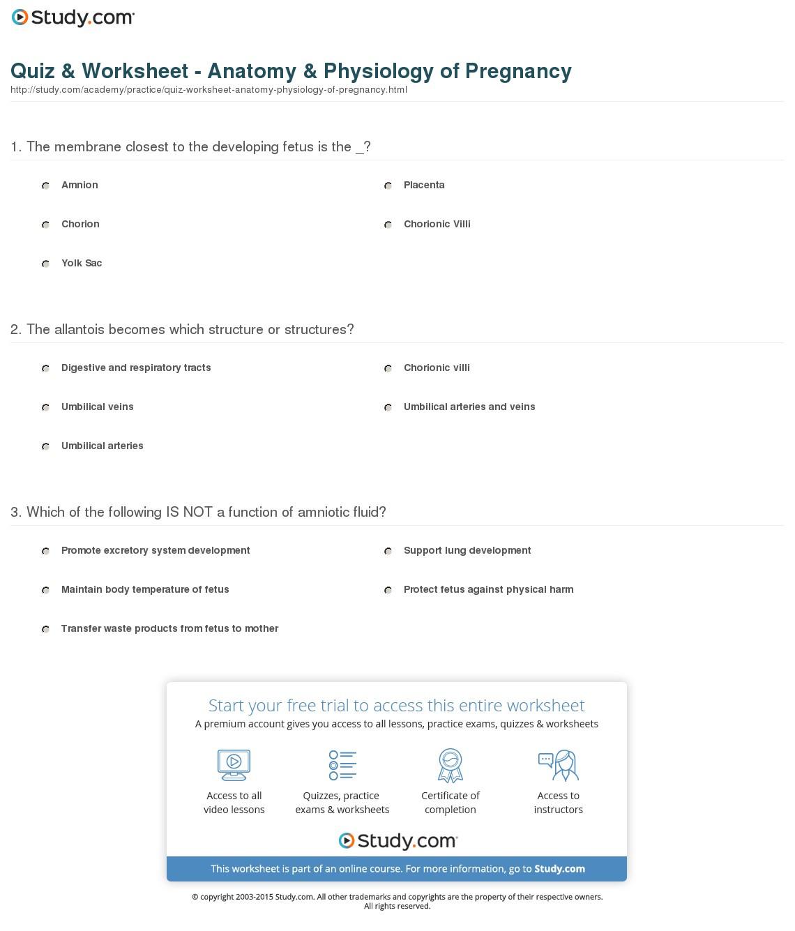 Quiz Worksheet Anatomy Physiology Of Pregnancy Study