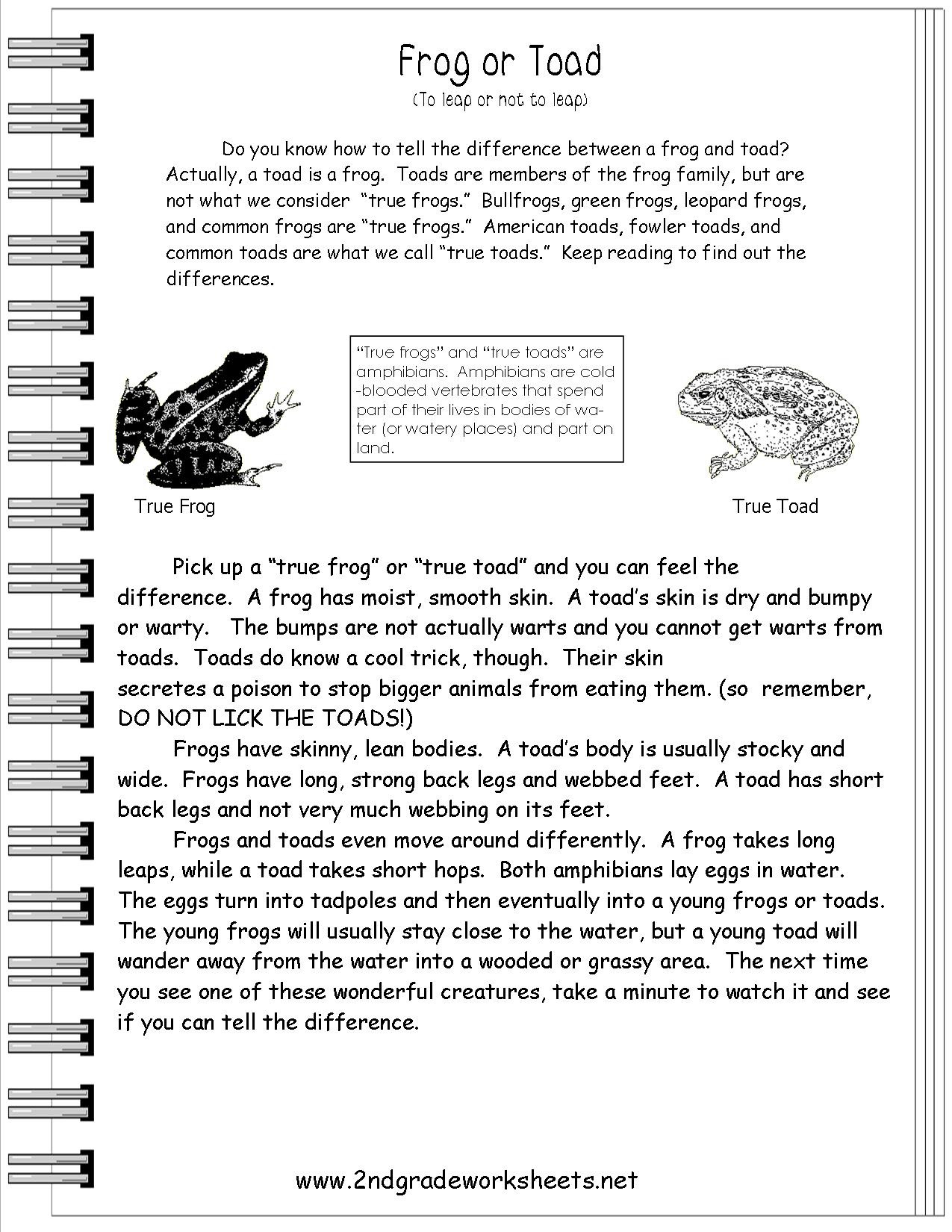 Text Features Worksheet 2nd Grade
